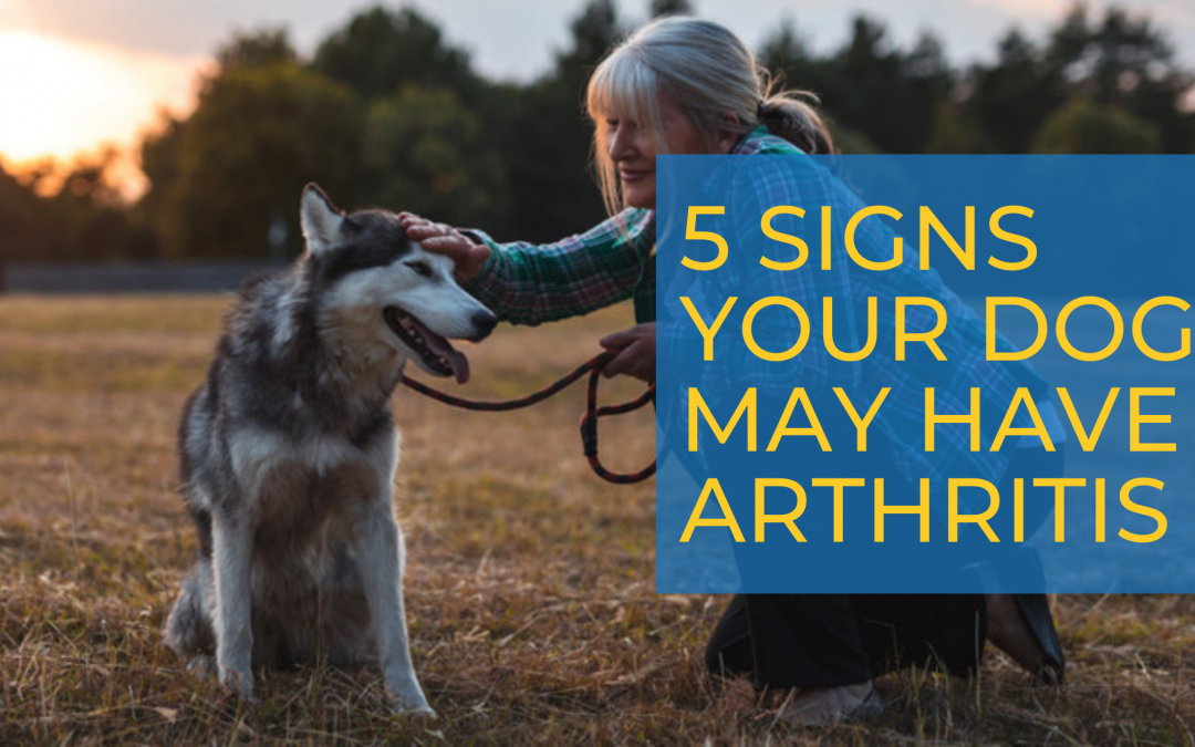 5 Signs Your Dog May Have Arthritis